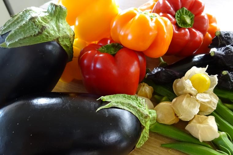 野菜収穫体験 おいしい野菜の会