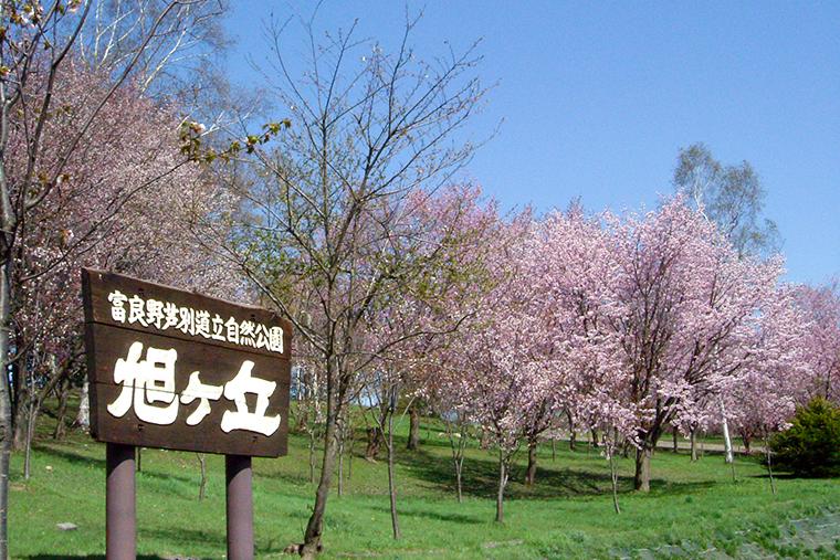 旭ヶ丘公園 季節の風景
