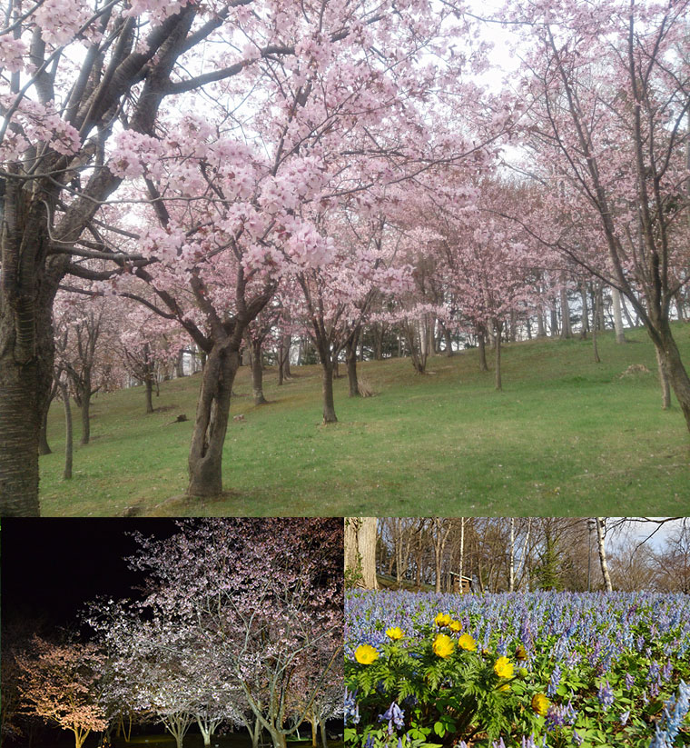 春の旭ヶ丘公園