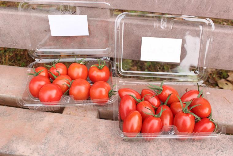 エコなハウス栽培で、野菜の少ない季節にも安全でおいしいトマト