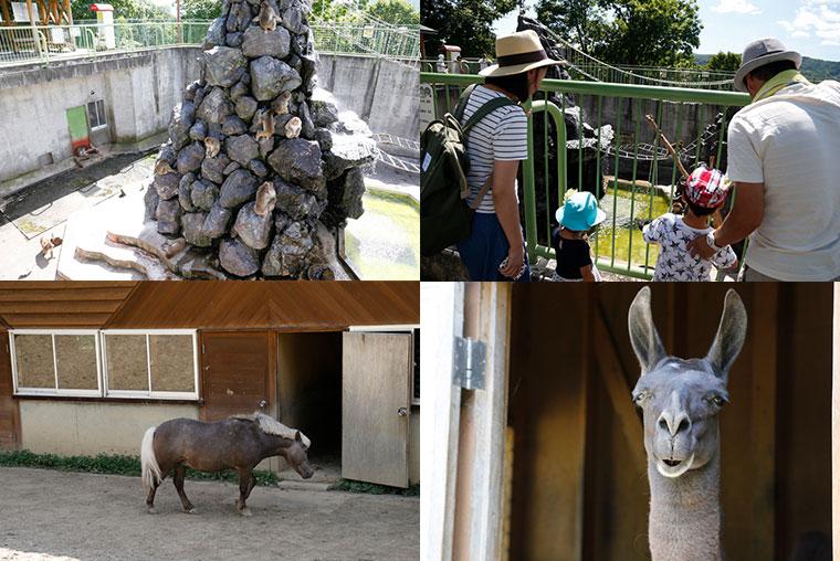 旭ヶ丘公園内の動物たち